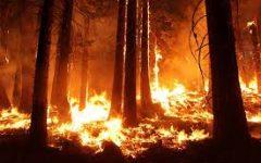 Pine Gulch Fire/Colorado Wildfire Video