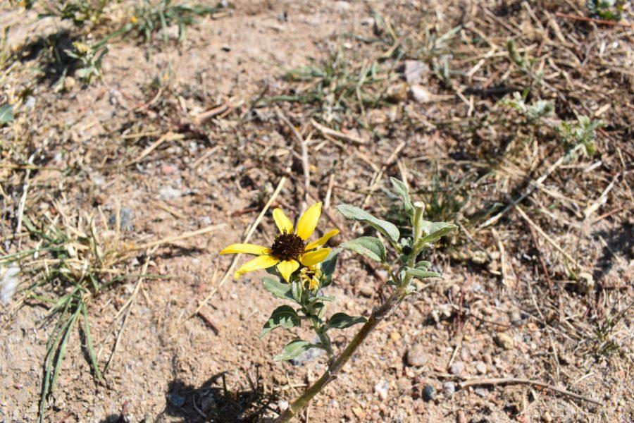 Wildflower pt.2
