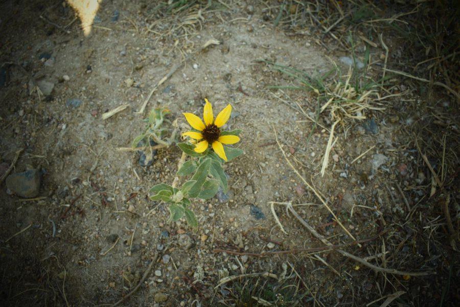 Wildflower pt.3