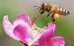 Bees Need Our Help!!